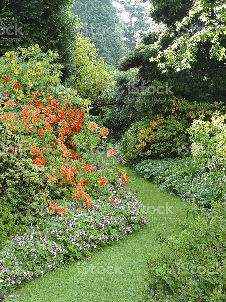 Garden path through flowering shrubs stock photo