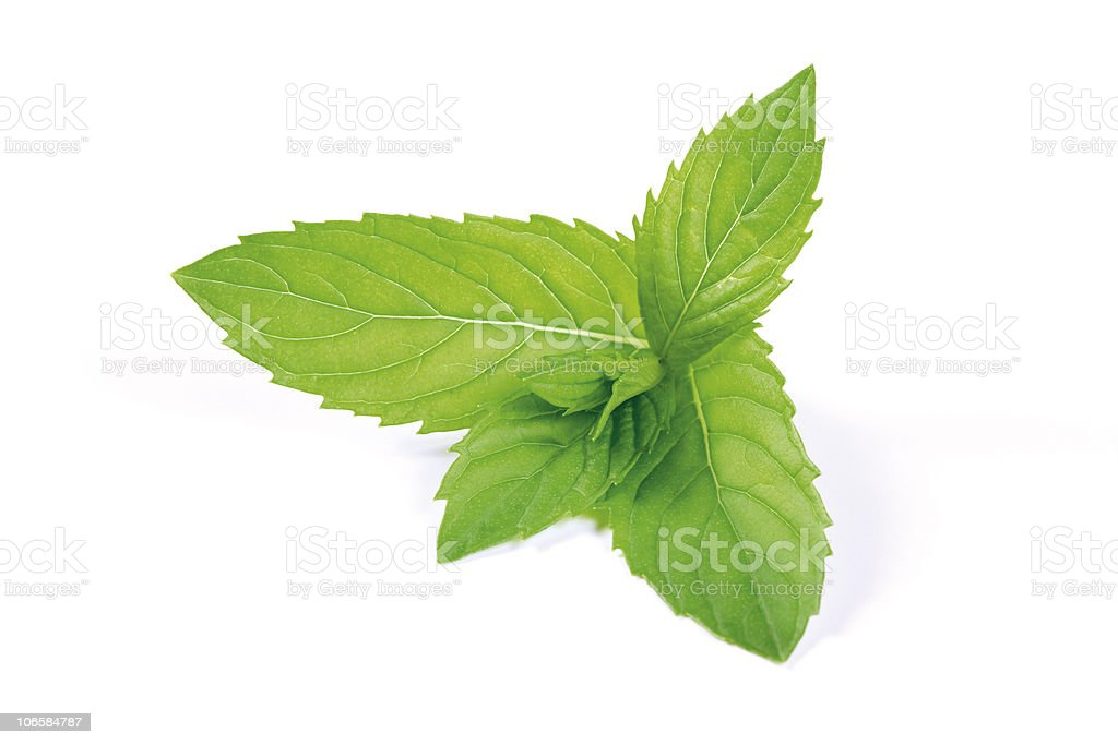Garden Peppermint leaves stock photo