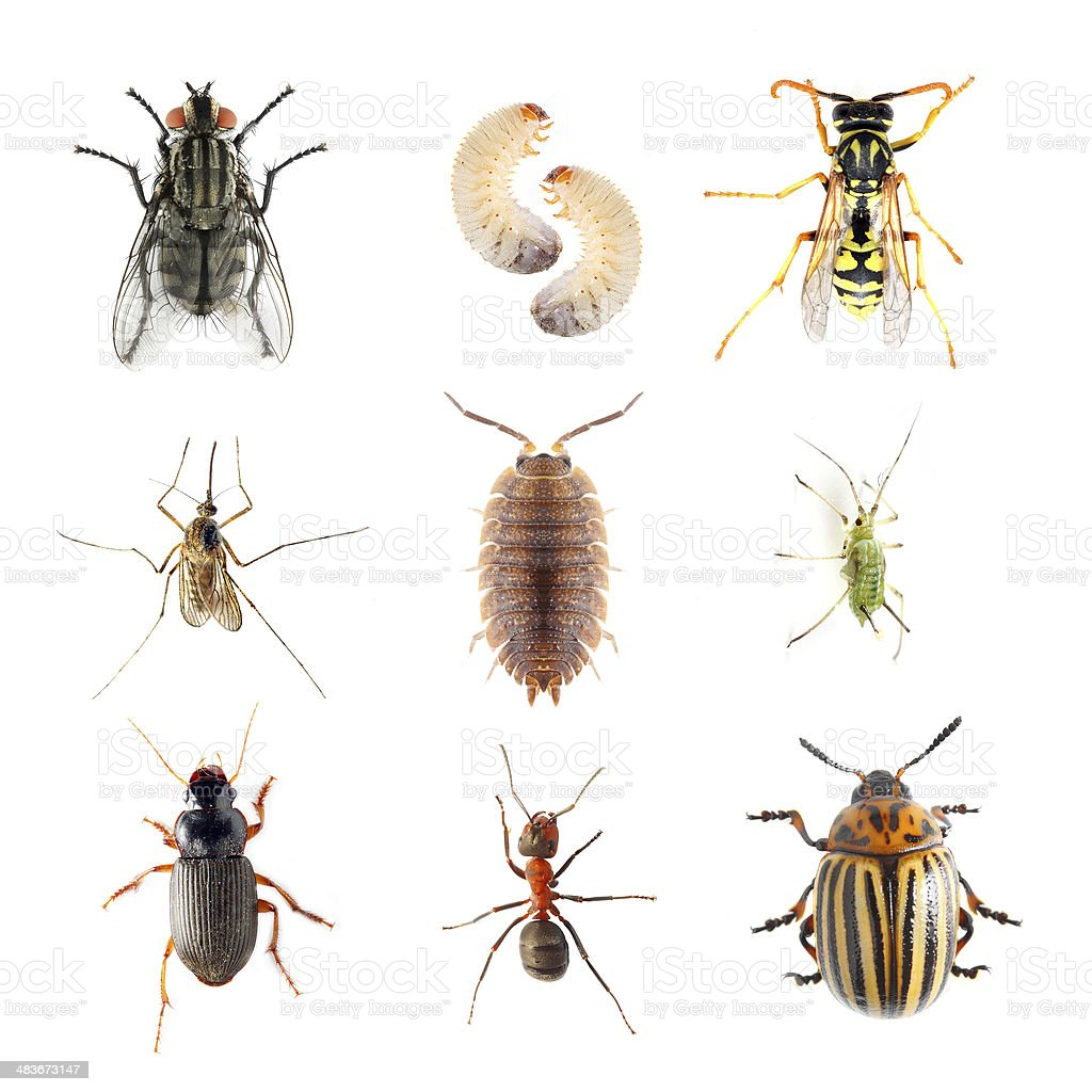 Garden pests. stock photo