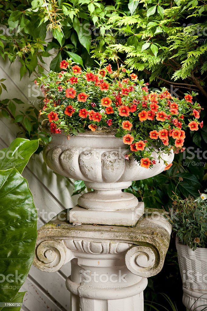 Garden Plant royalty-free stock photo