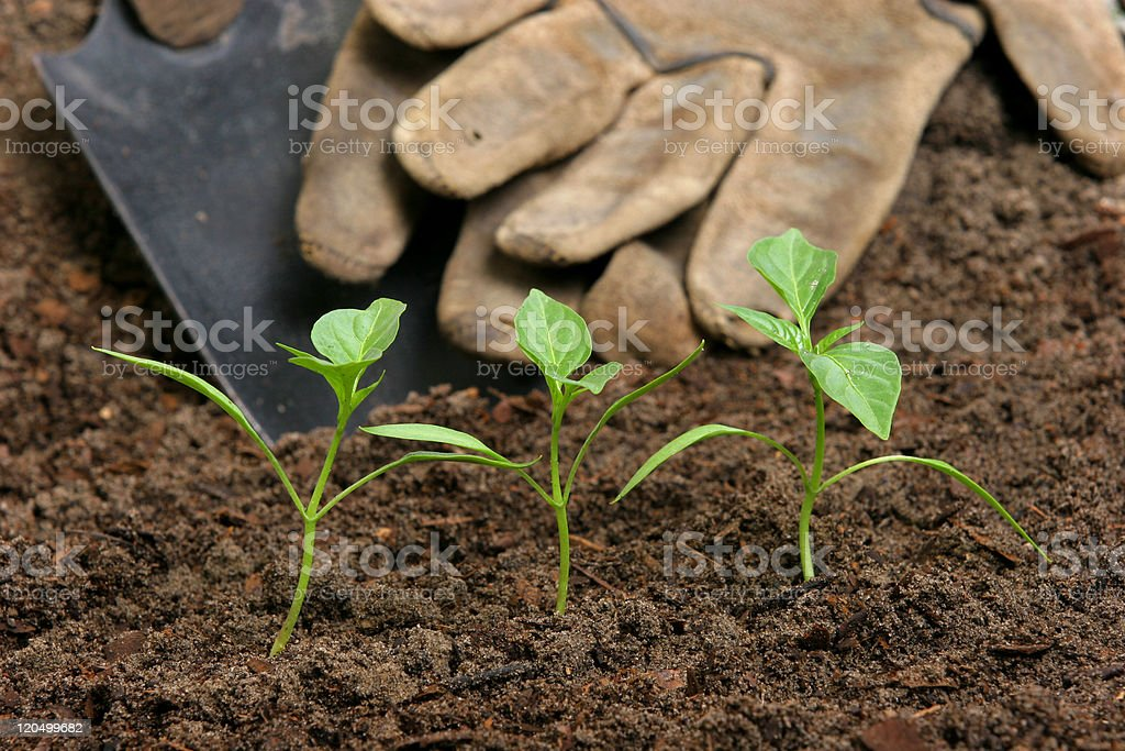 Garden planting stock photo