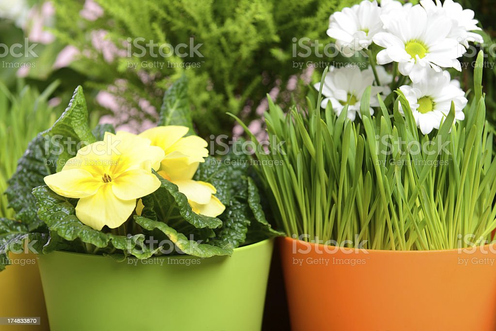 garden plants royalty-free stock photo