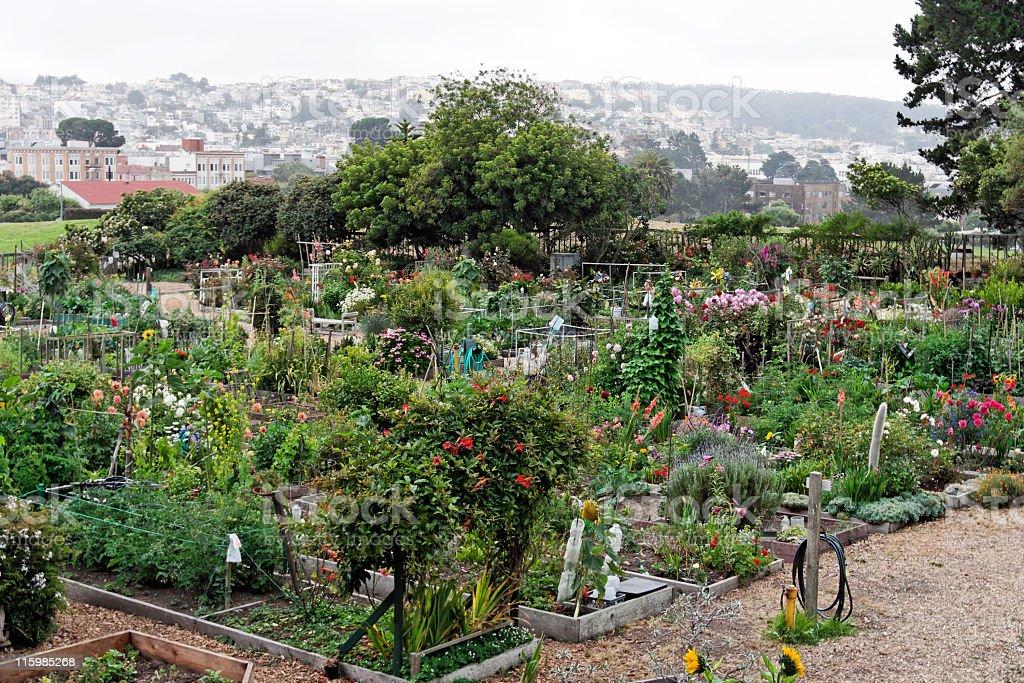 Garden Plots royalty-free stock photo