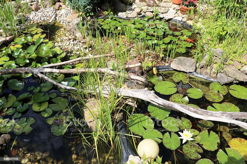 Garden pond in summer, Germany stock photo