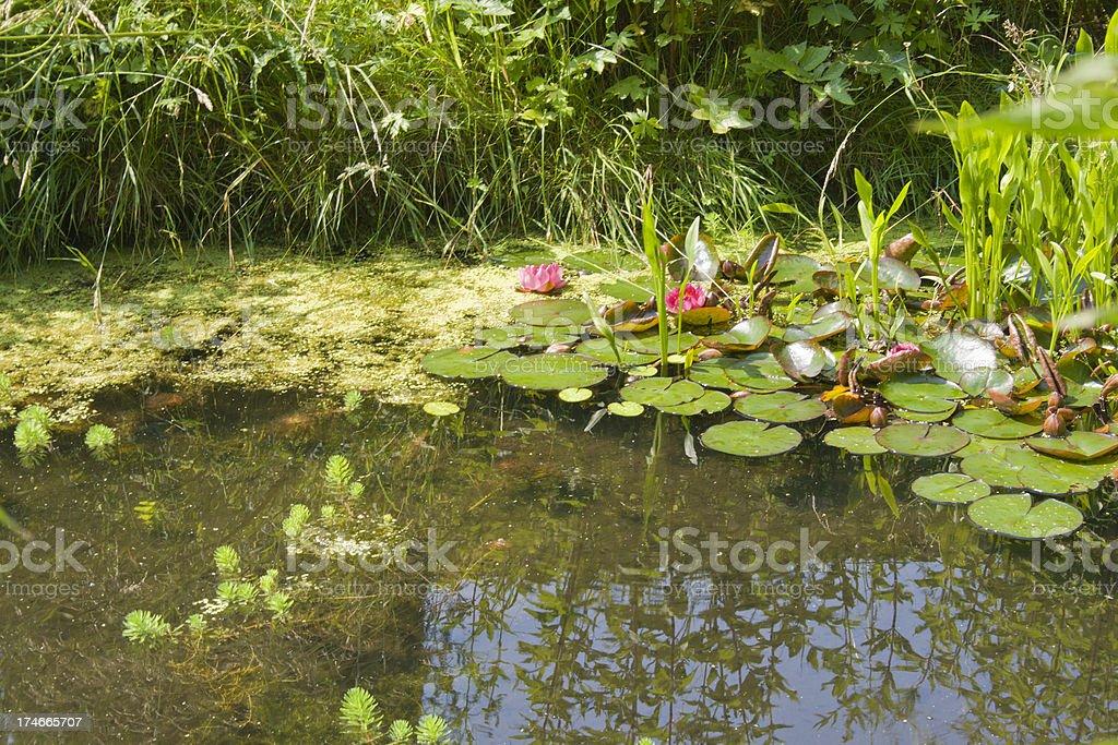 Garden Pond royalty-free stock photo