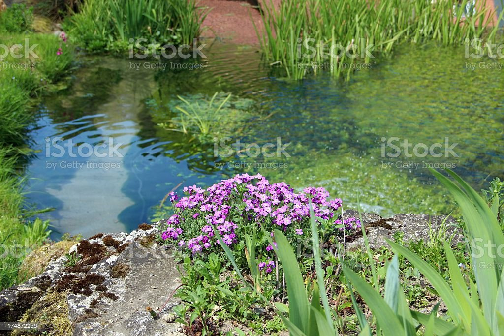 Garden pond royalty-free stock photo
