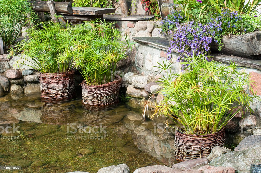 Garden pond stock photo