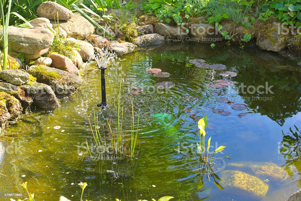 Garden pond with fountain stock photo