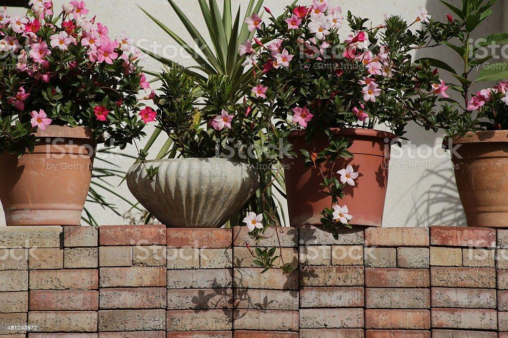 Garden pots. stock photo