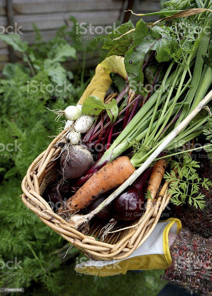 Garden produce royalty-free stock photo