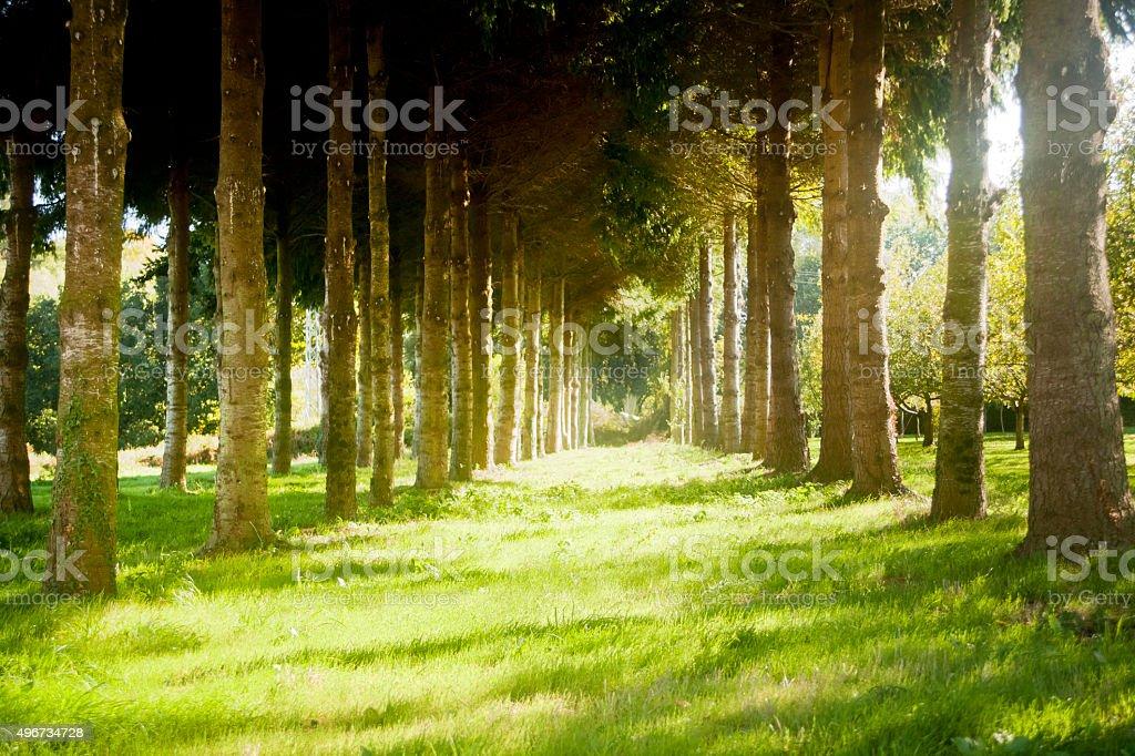 Garden promenade in the sunlight. stock photo