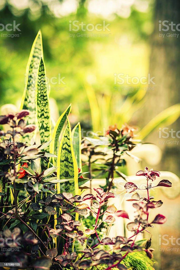 Garden Retreat royalty-free stock photo