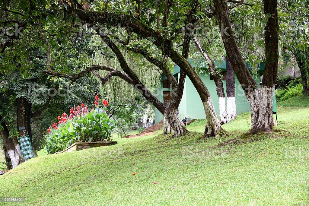 Garden ; Shillong ; Meghalaya ; India stock photo