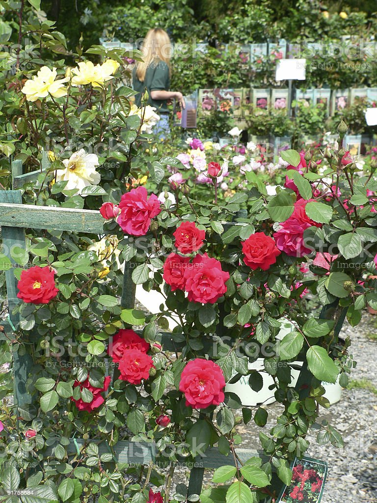 Garden Shop - Selling Roses royalty-free stock photo