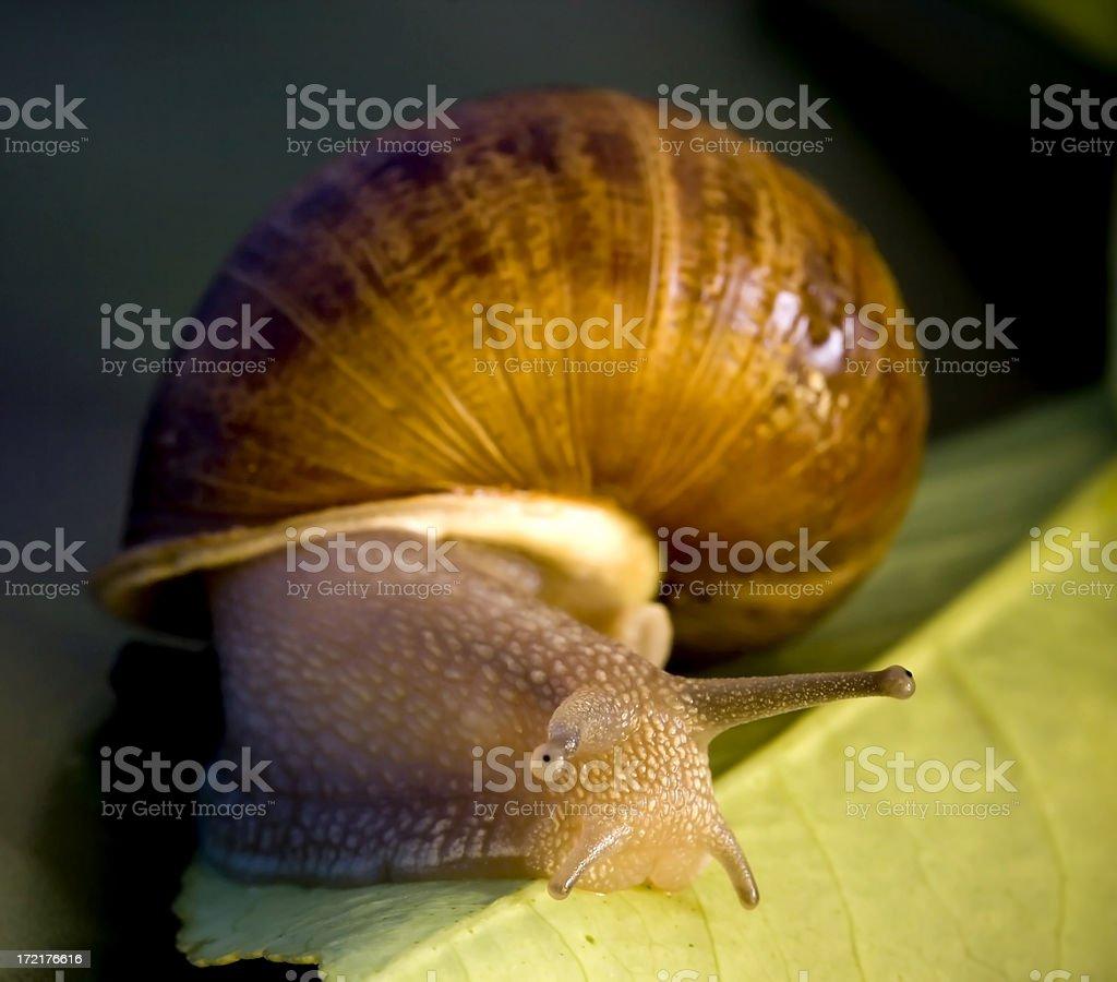 Garden Snail 2 stock photo