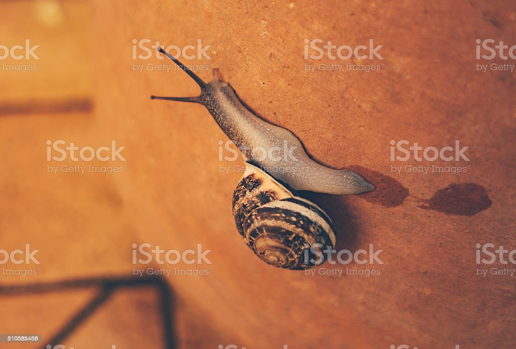 Garden snail climbing a terracotta flowerpot stock photo