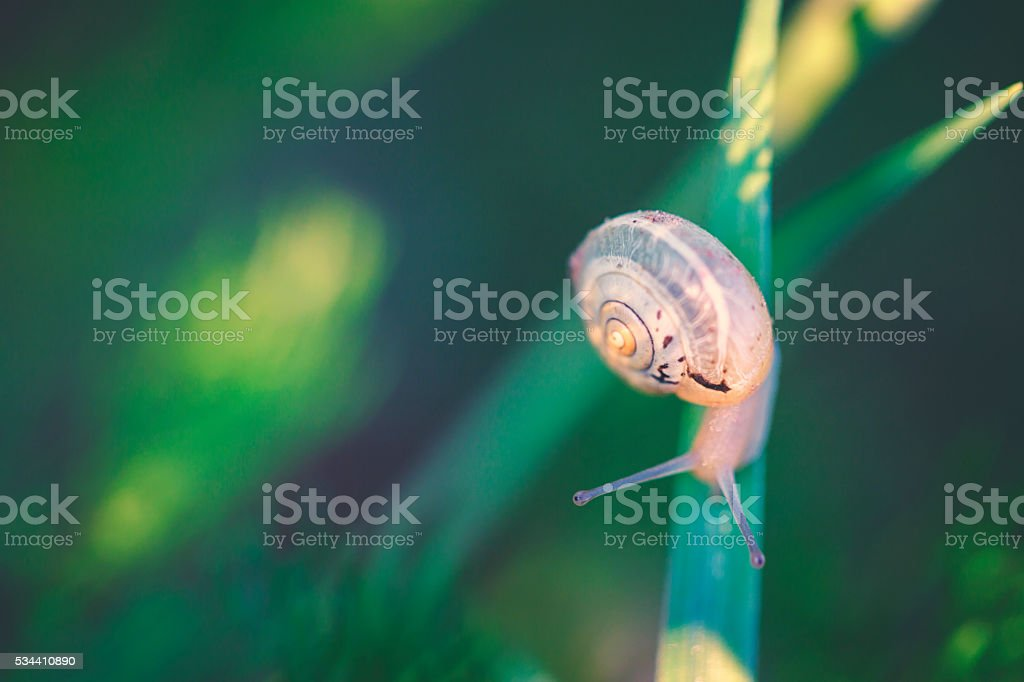 Garden snail comes their way stock photo