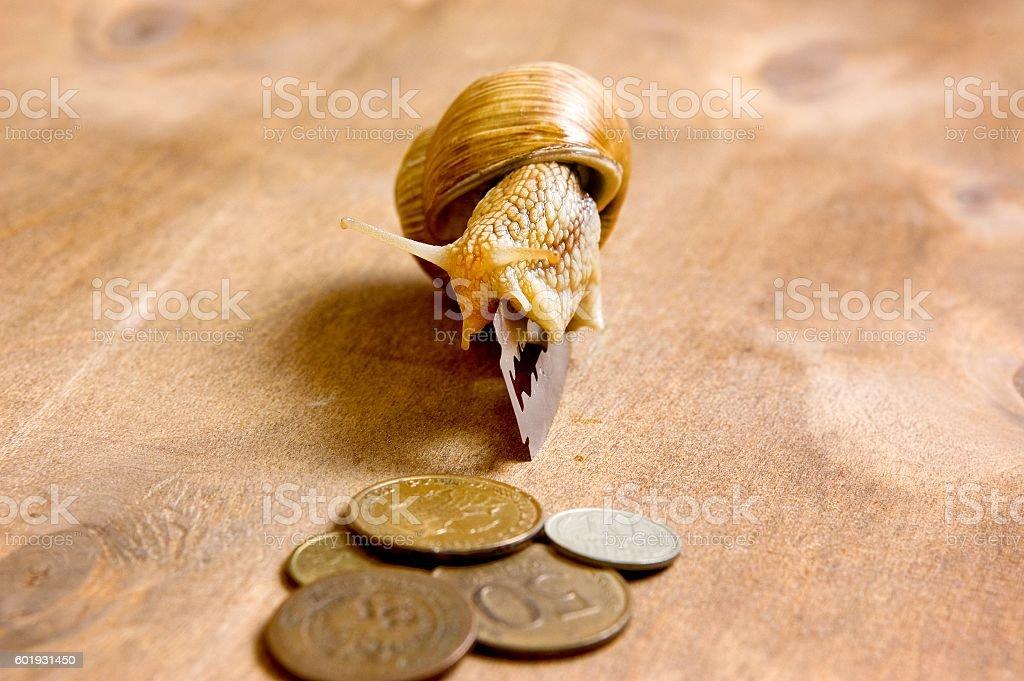 Garden snail creeps from a blade to the coins stock photo