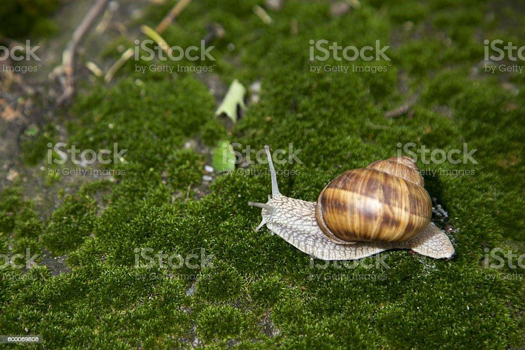 Garden snail on green 5 stock photo