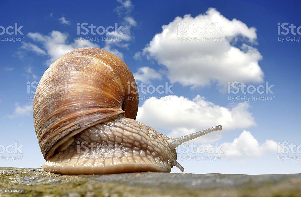 Garden snail stock photo