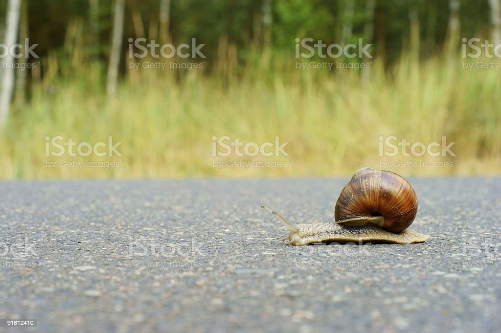 garden snail racing royalty-free stock photo