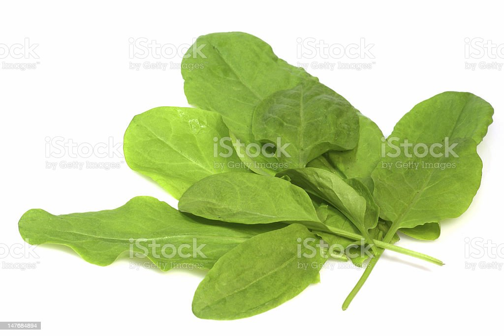 Garden sorrel royalty-free stock photo