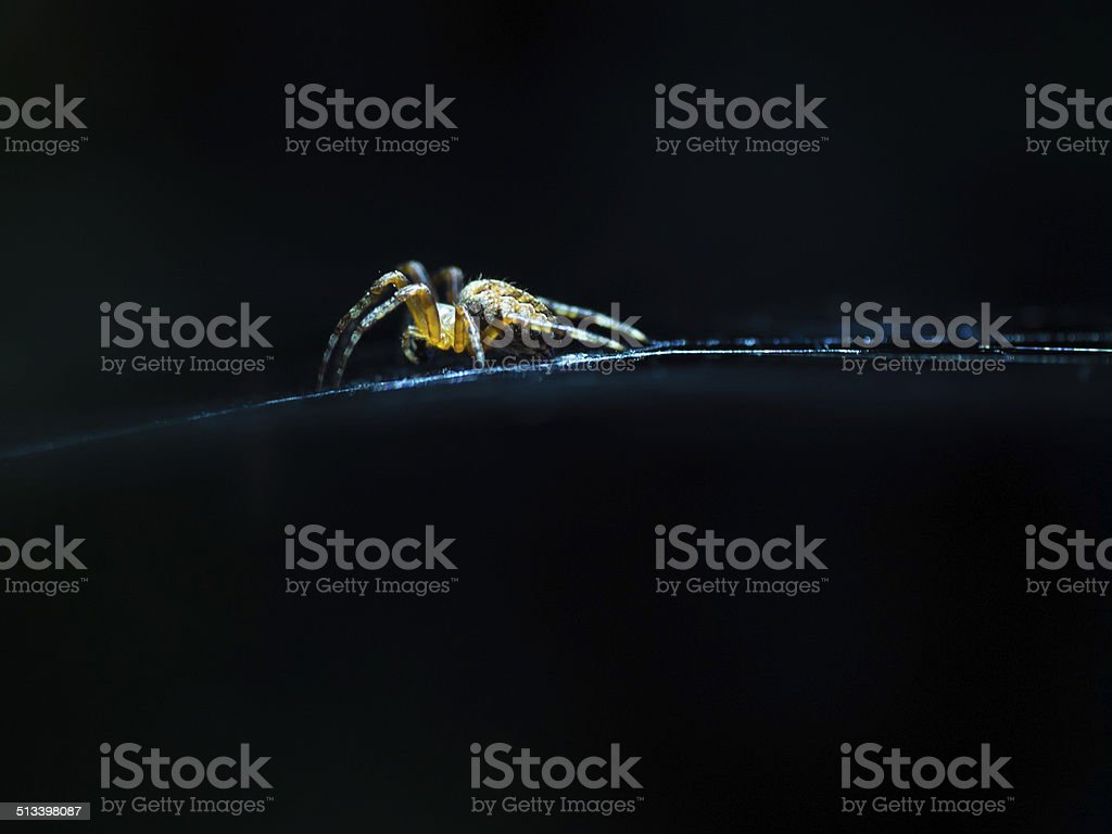 Garden spider against black background stock photo
