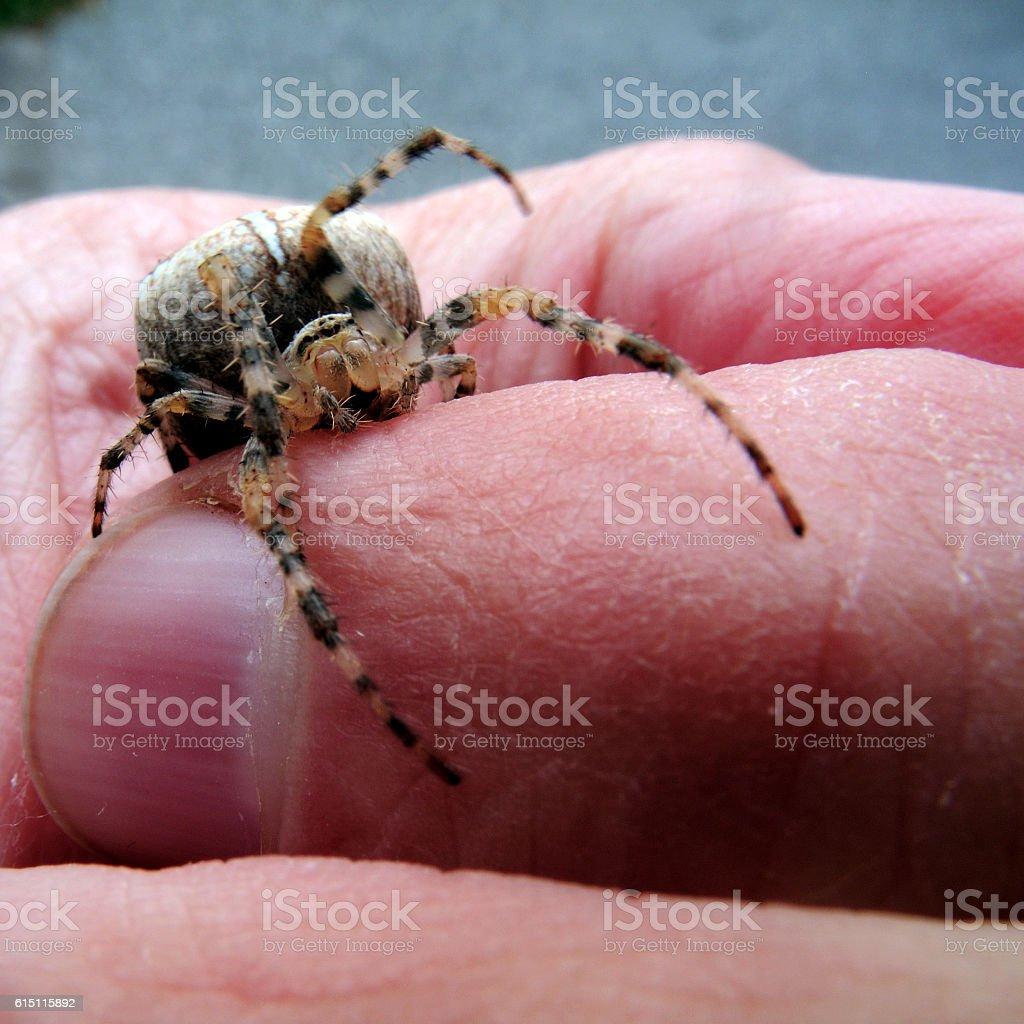 Garden spider in close-up stock photo