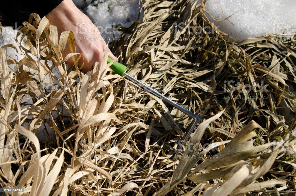 Garden. Spring. Care of plants. stock photo