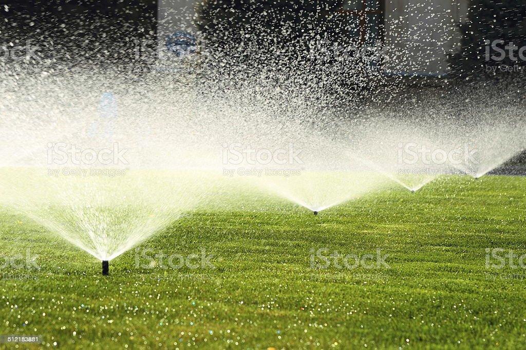 garden sprinkler on the green lawn stock photo