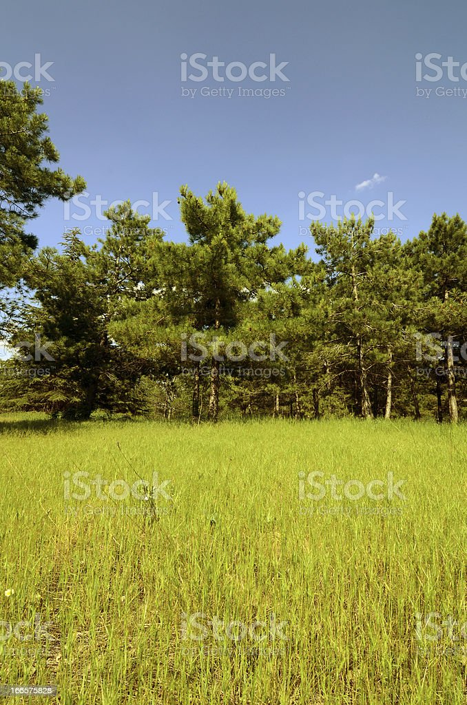 garden surrounded by trees royalty-free stock photo
