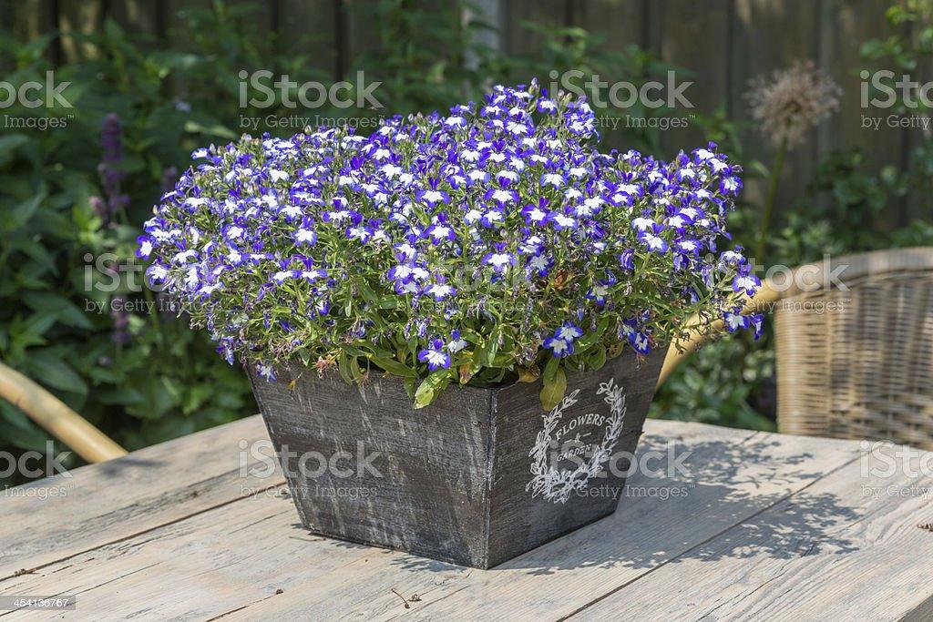 Garden table decorated with blue lobelias stock photo