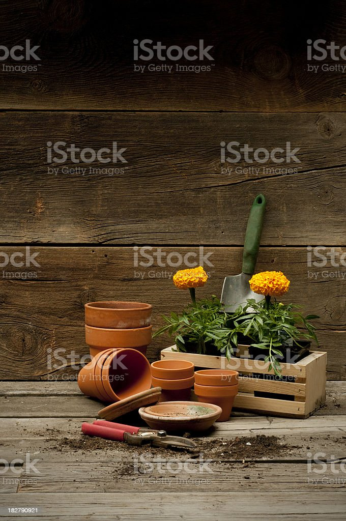 Garden theme stock photo