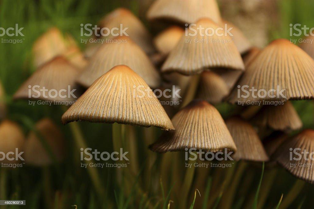 Garden toadstools stock photo
