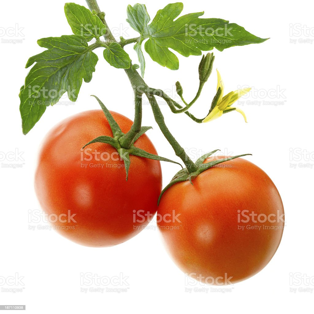 Garden Tomatoes stock photo