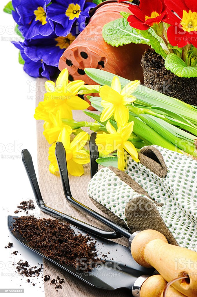 Garden tools and colorful flowers royalty-free stock photo