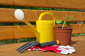 Garden tools and seedlings