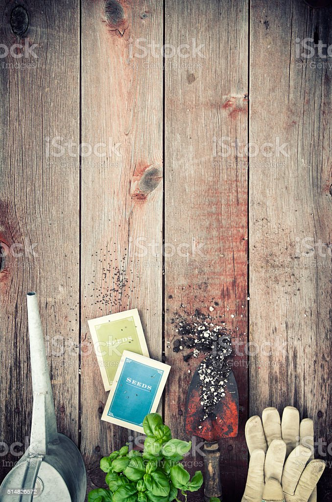 Garden Tools, Seeds, Herbs and Basil on Old Wood Background stock photo