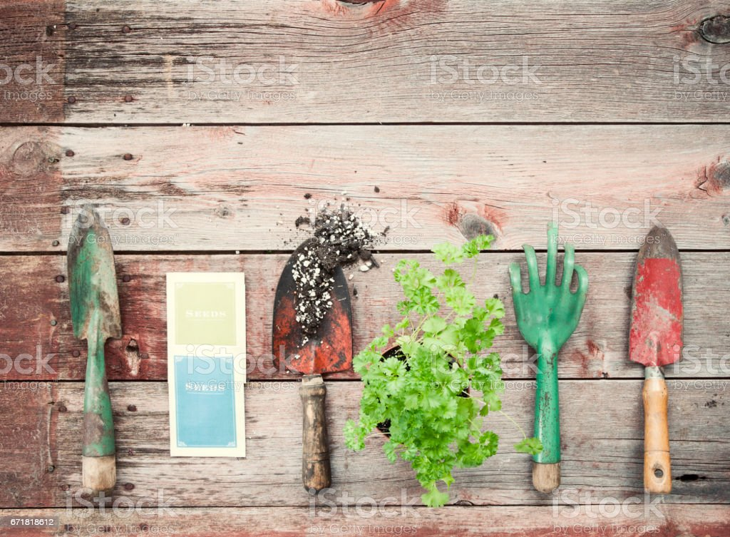 Garden Tools, Seeds, Herbs and Parsley on Old Wood Background stock photo