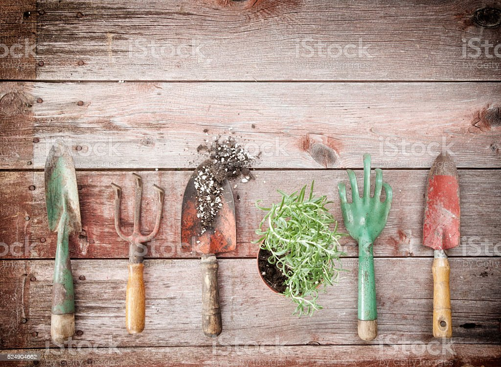 Garden Tools, Seeds, Herbs and Rosemary on Old Wood Background stock photo