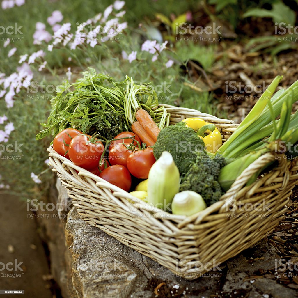 Garden Vegetable Basket royalty-free stock photo