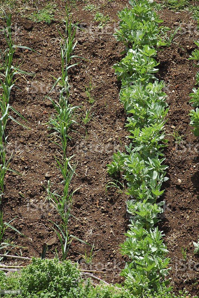 Garden Vegetable Plot royalty-free stock photo