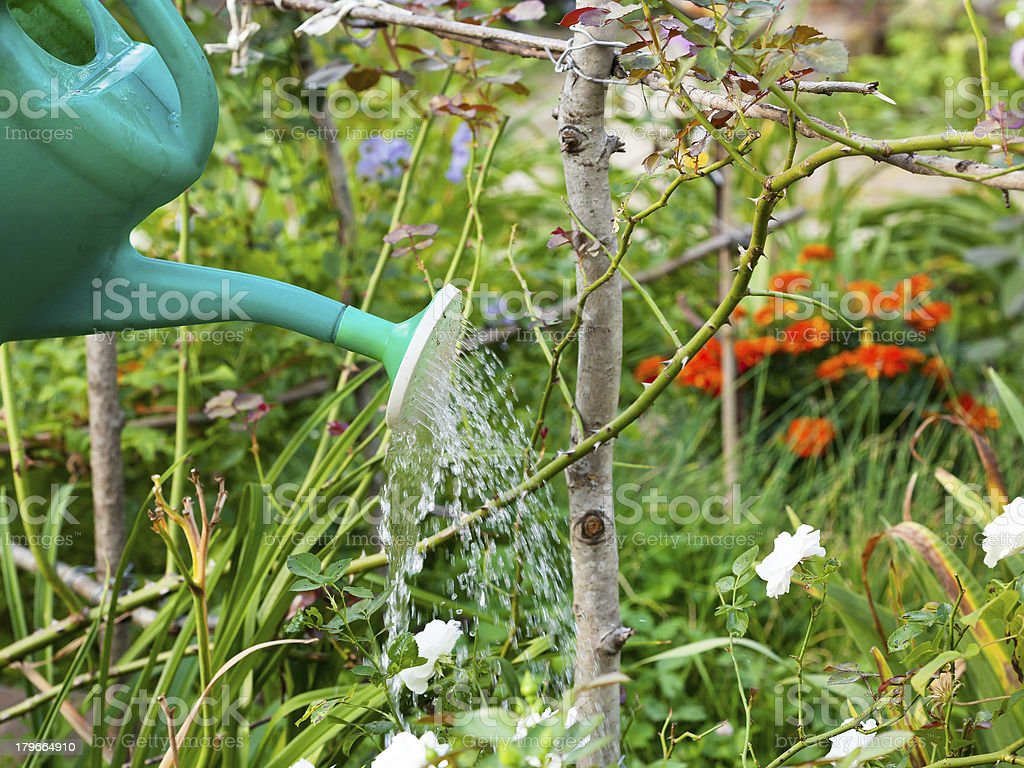 garden watering royalty-free stock photo