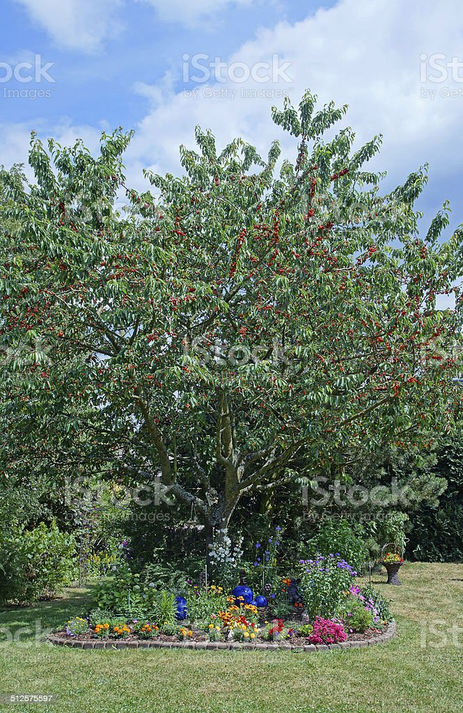 Garden with cherry tree stock photo