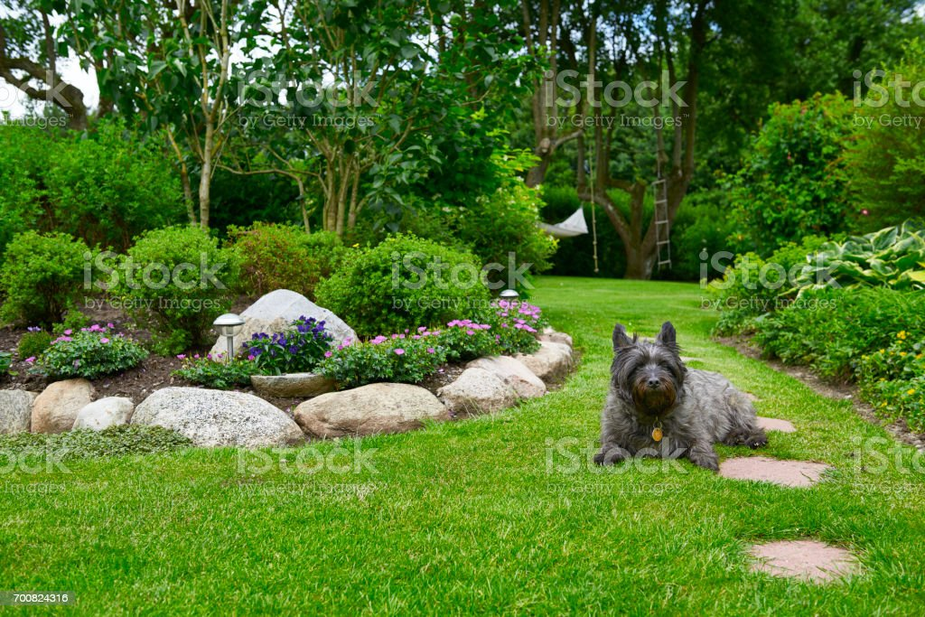 Garden with dog lying on the lawn stock photo