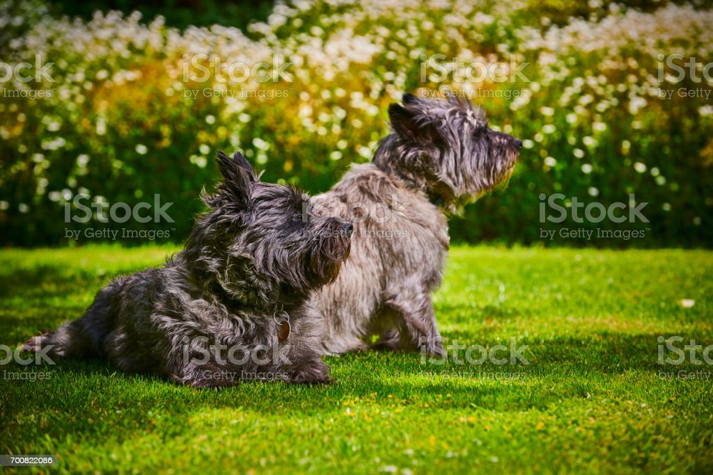 Garden with dogs sitting on the lawn stock photo