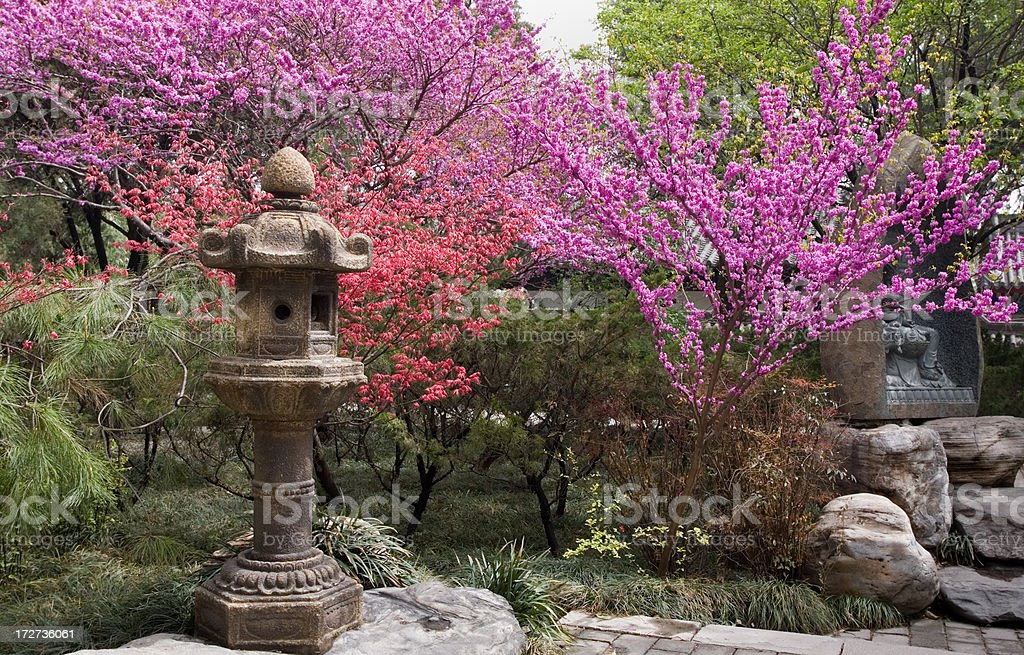 Garden with Flowering Trees - Xian stock photo