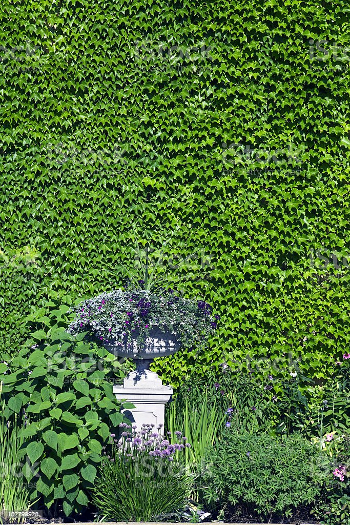 Garden with Ivy-Covered Wall royalty-free stock photo
