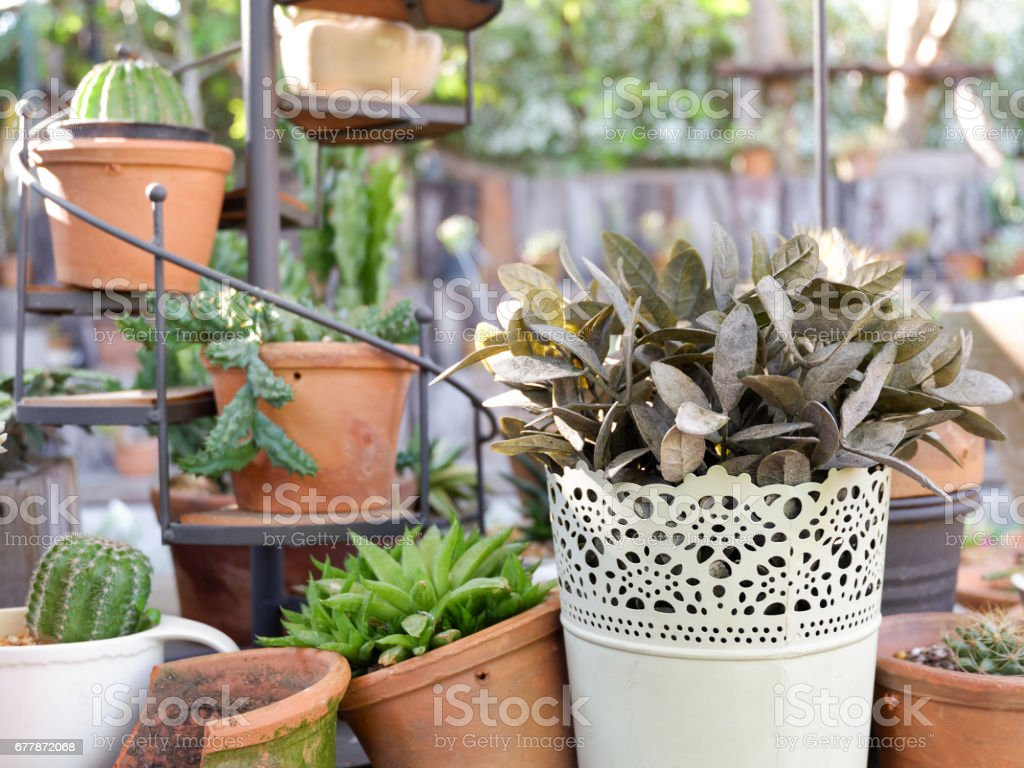 Garden with small plants on the table stock photo