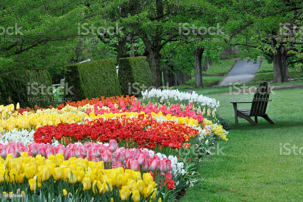 Garden with Tulips royalty-free stock photo